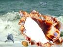 Jūros kriauklė
