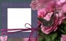 Drugelis ant gėlės