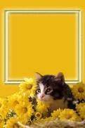 Katė gėlėmis